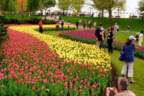 8 lễ hội hoa tuyệt đẹp trên thế giới