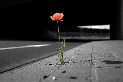 Đã yêu là chẳng ai muốn bỏ đi... Dù mệt mỏi cũng được, đau đớn cũng đành!