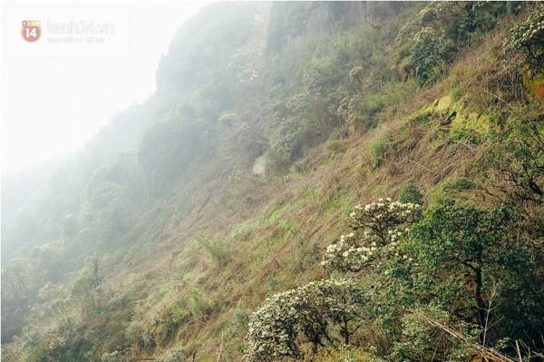 Mê mẩn trong sắc hoa đỗ quyên Fansipan ở độ cao 3.000m
