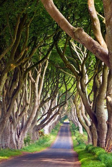 Đường Bregagh, Ballymoney, Ireland: Còn được biết đến với tên gọi Dark Hedge (hàng rào đen tối), con đường nổi tiếng nhờ hai hàng sồi già hơn 300 tuổi mọc hai bên đường, uốn cong và đan vào nhau thành vòm. Hàng sồi được gia đình Stuart trồng vào thế kỷ 18, giờ đã trở thành một trong những thắng cảnh thiên nhiên được chụp nhiều nhất ở bắc Ireland.