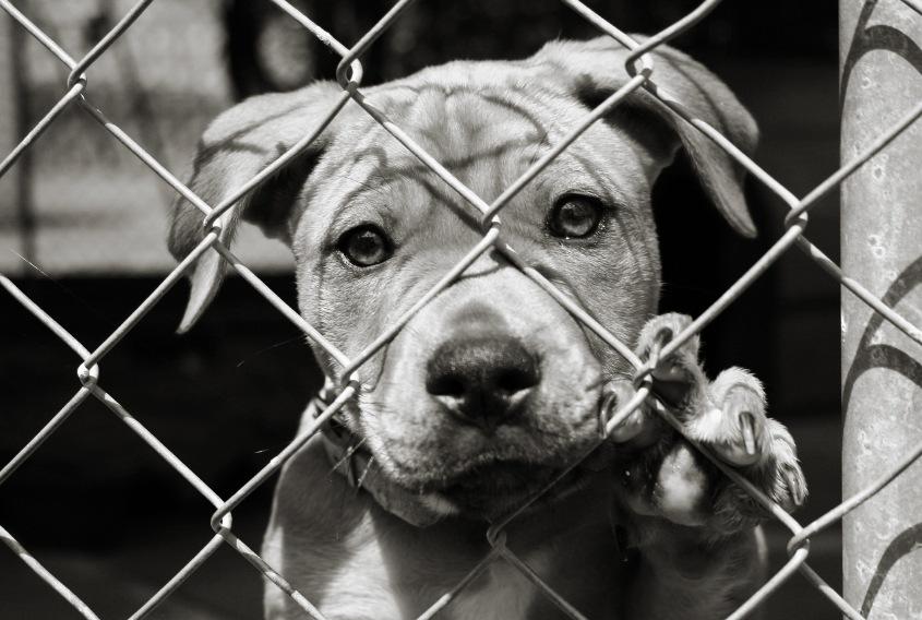 Đàn chó 'vái lạy' xin tôi cứu mạng - GUU.vn