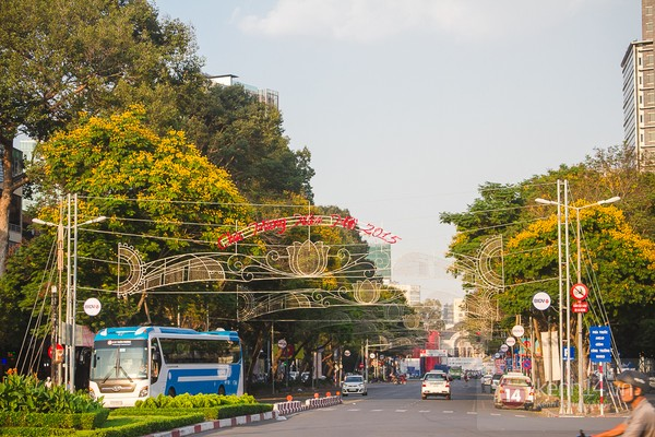 Sài Gòn đẹp rực rỡ những cánh hoa điệp vàng trái mùa 15