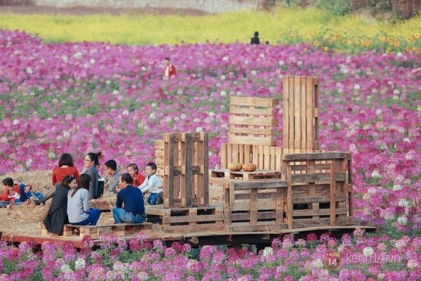 4 địa điểm chụp ảnh với hoa đẹp hút hồn ở Hà Nội 10