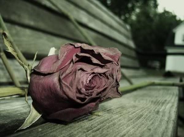 Cảm động bức thư bố gửi bạn gái của con trai đã qua đời trên VOV 1