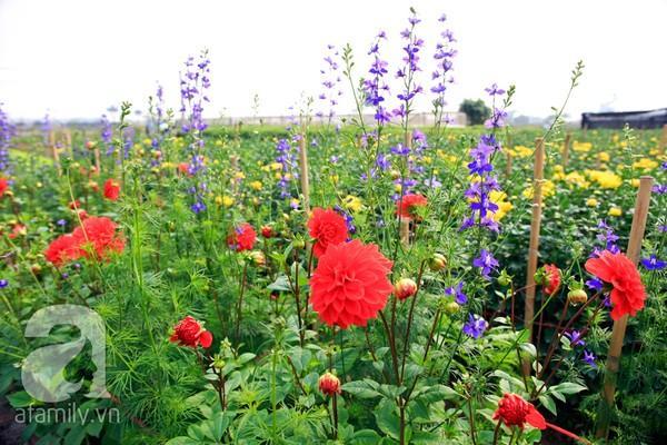 4 địa điểm chụp ảnh với hoa đẹp hút hồn ở Hà Nội 4