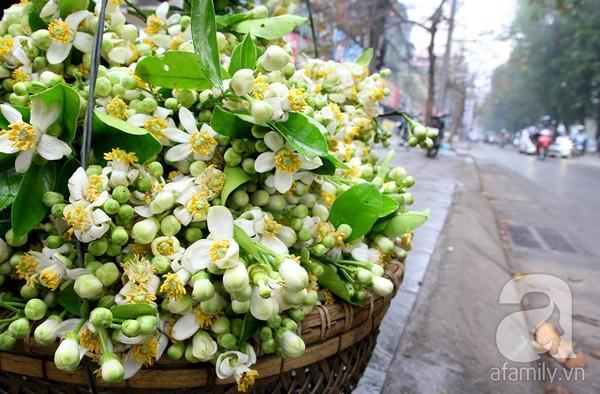 Hà Nội dịu dàng hương hoa bưởi tháng 3 4