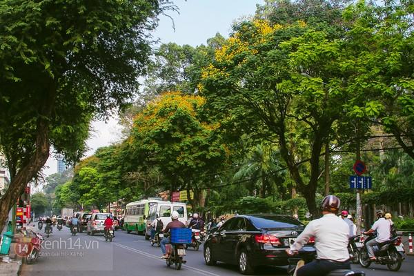 Sài Gòn đẹp rực rỡ những cánh hoa điệp vàng trái mùa 1