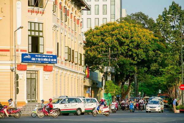 Sài Gòn đẹp rực rỡ những cánh hoa điệp vàng trái mùa 17