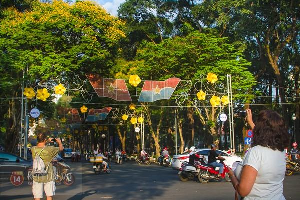 Sài Gòn đẹp rực rỡ những cánh hoa điệp vàng trái mùa 12