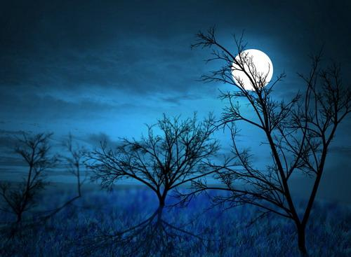 Full-Moon-Midnight-Forest-by-G-1250-8505