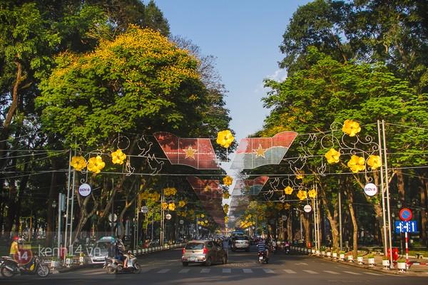Sài Gòn đẹp rực rỡ những cánh hoa điệp vàng trái mùa 10