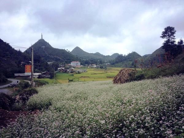 Những điểm ngắm hoa tam giác mạch đẹp nhất Hà Giang