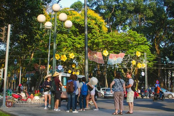 Sài Gòn đẹp rực rỡ những cánh hoa điệp vàng trái mùa 11
