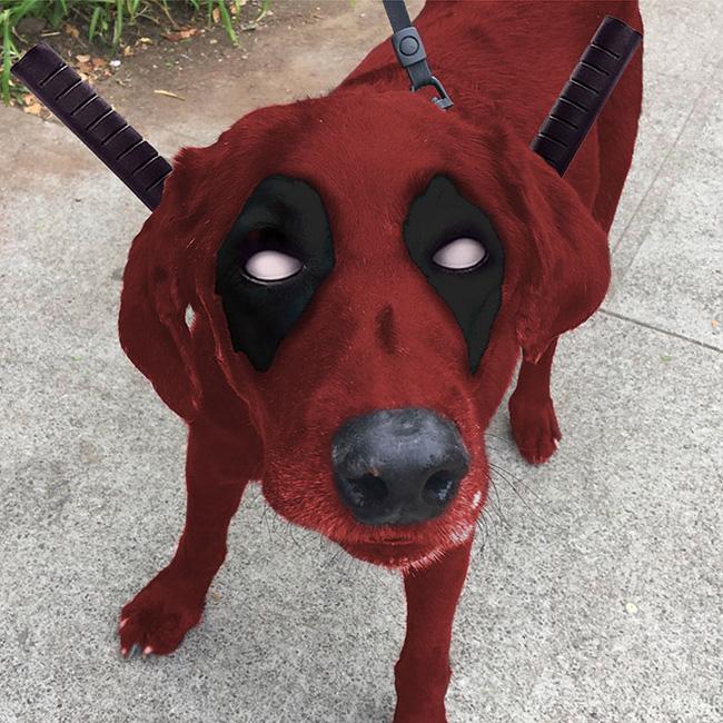 Xem loạt ảnh chế của chú chó này mới thấy sinh ra có đôi mắt gấu trúc cũng là cái tội - Ảnh 5.