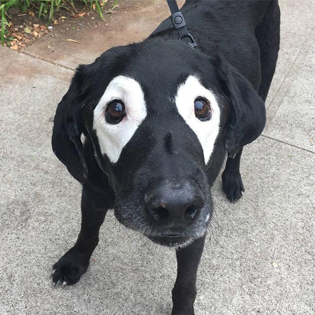 Xem loạt ảnh chế của chú chó này mới thấy sinh ra có đôi mắt gấu trúc cũng là cái tội - Ảnh 1.