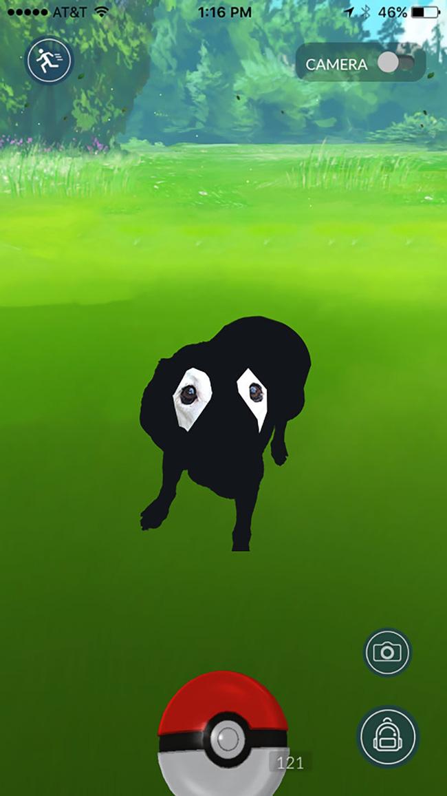 Xem loạt ảnh chế của chú chó này mới thấy sinh ra có đôi mắt gấu trúc cũng là cái tội - Ảnh 7.