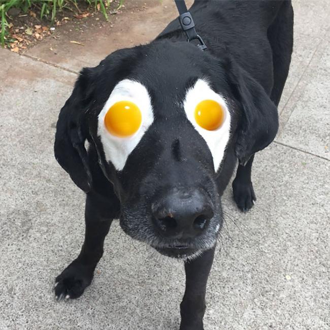 Xem loạt ảnh chế của chú chó này mới thấy sinh ra có đôi mắt gấu trúc cũng là cái tội - Ảnh 3.