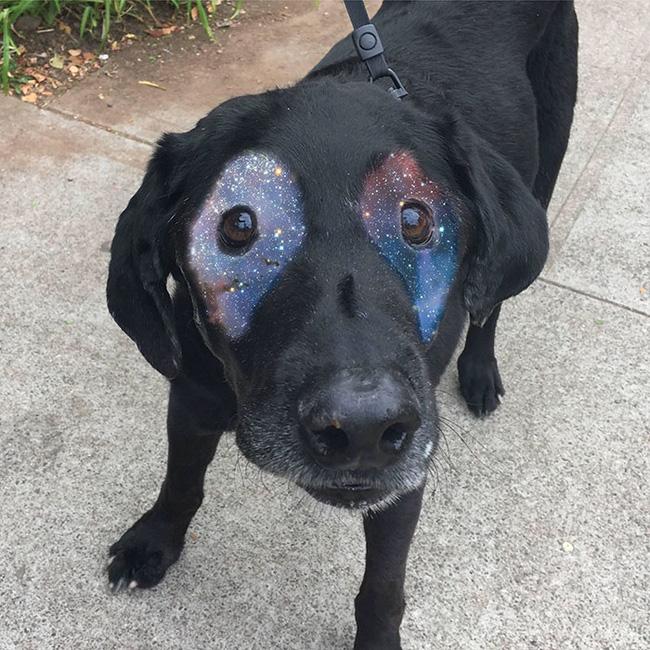 Xem loạt ảnh chế của chú chó này mới thấy sinh ra có đôi mắt gấu trúc cũng là cái tội - Ảnh 2.