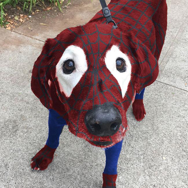 Xem loạt ảnh chế của chú chó này mới thấy sinh ra có đôi mắt gấu trúc cũng là cái tội - Ảnh 4.