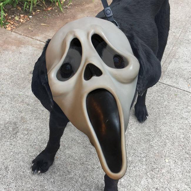 Xem loạt ảnh chế của chú chó này mới thấy sinh ra có đôi mắt gấu trúc cũng là cái tội - Ảnh 12.