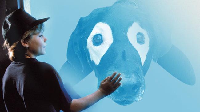 Xem loạt ảnh chế của chú chó này mới thấy sinh ra có đôi mắt gấu trúc cũng là cái tội - Ảnh 9.