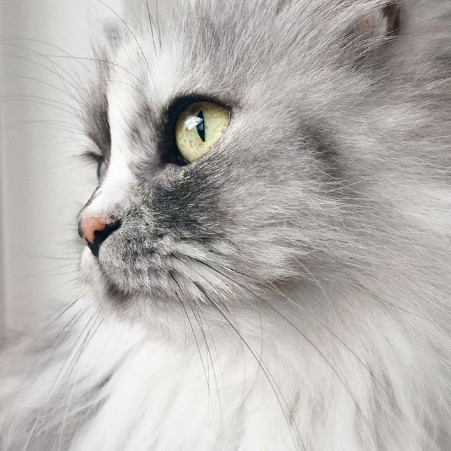 Có em mèo lông xù xinh thế này, chắc cả ngày ngồi ôm cũng không chán - Ảnh 8.