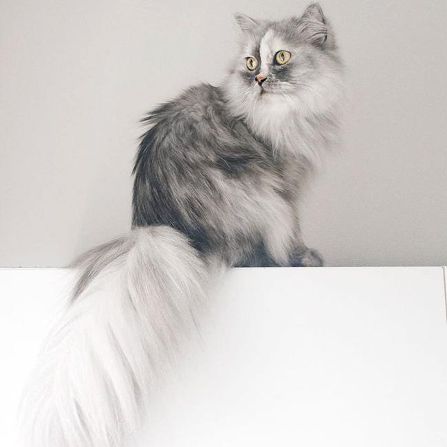 Có em mèo lông xù xinh thế này, chắc cả ngày ngồi ôm cũng không chán - Ảnh 7.