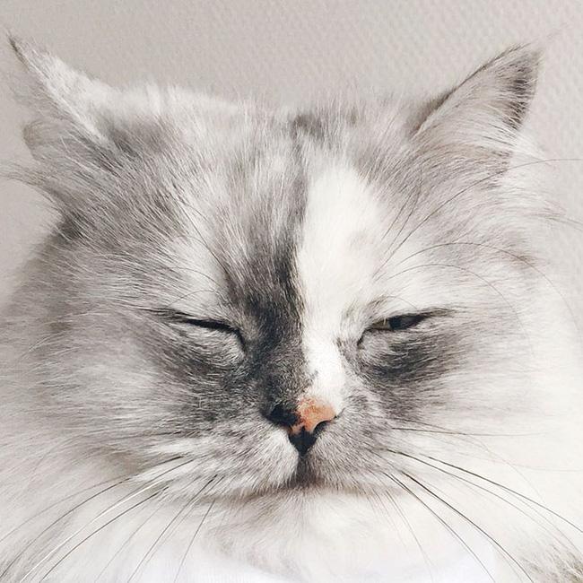 Có em mèo lông xù xinh thế này, chắc cả ngày ngồi ôm cũng không chán - Ảnh 11.