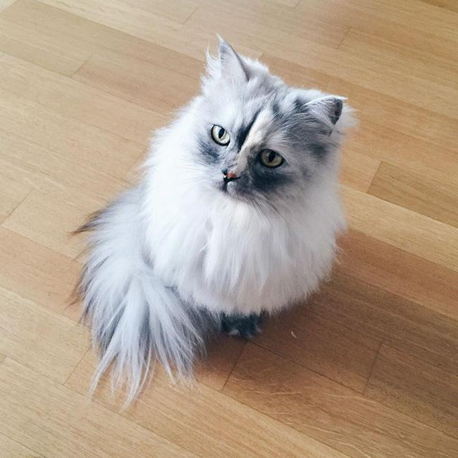 Có em mèo lông xù xinh thế này, chắc cả ngày ngồi ôm cũng không chán - Ảnh 12.
