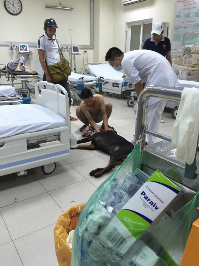 Thờ ơ, tàn nhẫn với động vật gặp nạn: Biểu hiện của tính ích kỷ và thù hận cá nhân - Ảnh 2.
