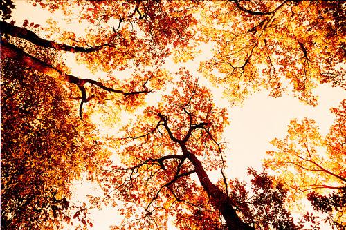 Kết quả hình ảnh cho autumn tumblr