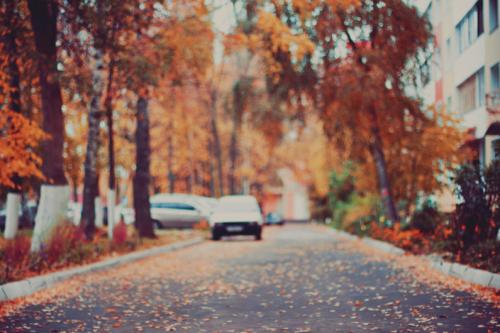 Kết quả hình ảnh cho autumn street tumblr