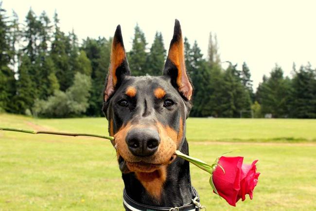 14 lý do chứng minh người yêu có thể không có nhưng chó nhất định phải có một con - Ảnh 13.