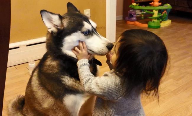 14 lý do chứng minh người yêu có thể không có nhưng chó nhất định phải có một con - Ảnh 6.