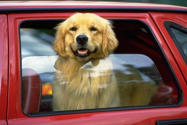 14 lý do chứng minh người yêu có thể không có nhưng chó nhất định phải có một con - Ảnh 3.