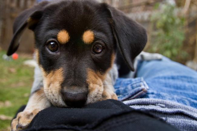 14 lý do chứng minh người yêu có thể không có nhưng chó nhất định phải có một con - Ảnh 4.
