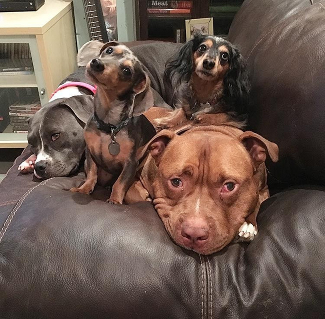 Chú chó không-thể-ngừng toe toét kể từ lúc được nhận nuôi từ trạm cứu hộ - Ảnh 9.
