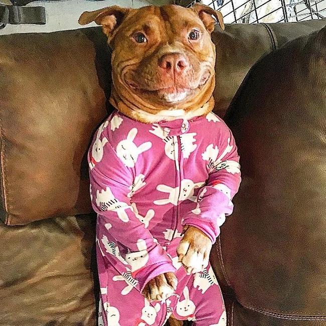 Chú chó không-thể-ngừng toe toét kể từ lúc được nhận nuôi từ trạm cứu hộ - Ảnh 2.