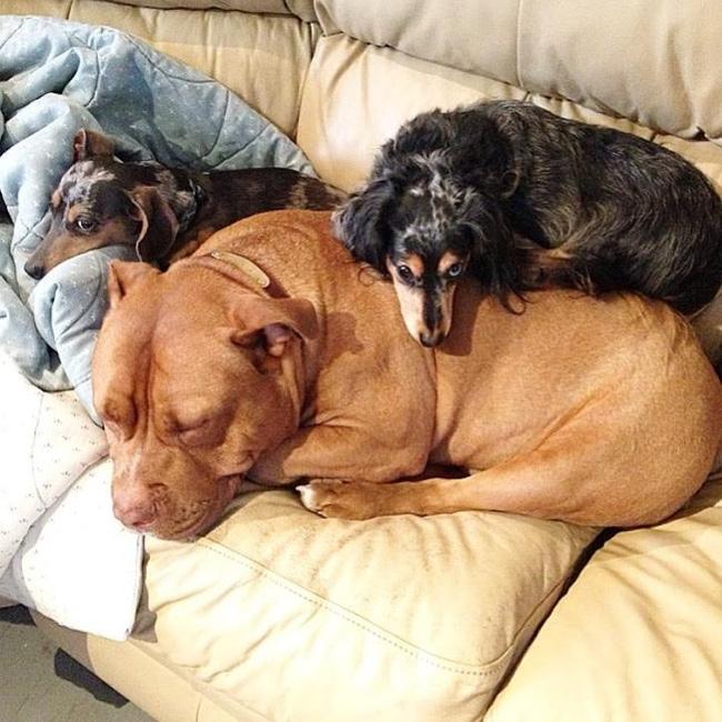 Chú chó không-thể-ngừng toe toét kể từ lúc được nhận nuôi từ trạm cứu hộ - Ảnh 3.
