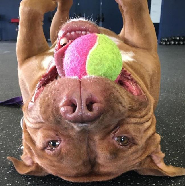 Chú chó không-thể-ngừng toe toét kể từ lúc được nhận nuôi từ trạm cứu hộ - Ảnh 5.