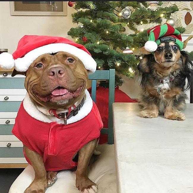 Chú chó không-thể-ngừng toe toét kể từ lúc được nhận nuôi từ trạm cứu hộ - Ảnh 8.