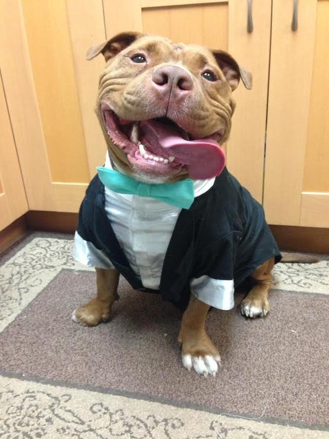 Chú chó không-thể-ngừng toe toét kể từ lúc được nhận nuôi từ trạm cứu hộ - Ảnh 10.