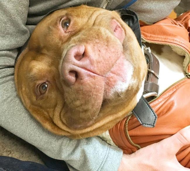 Chú chó không-thể-ngừng toe toét kể từ lúc được nhận nuôi từ trạm cứu hộ - Ảnh 7.