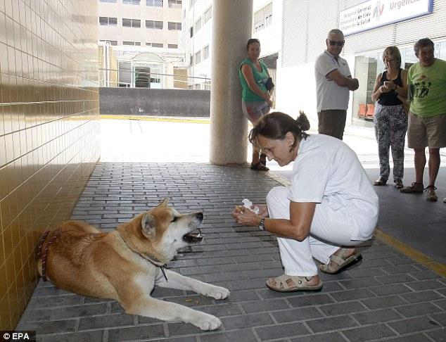 Chú chó trung thành ngồi đợi chủ suốt 1 tuần ngoài cổng bệnh viện - Ảnh 1.