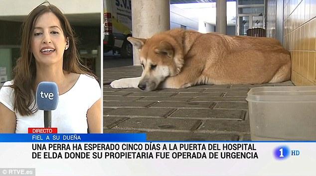Chú chó trung thành ngồi đợi chủ suốt 1 tuần ngoài cổng bệnh viện - Ảnh 2.
