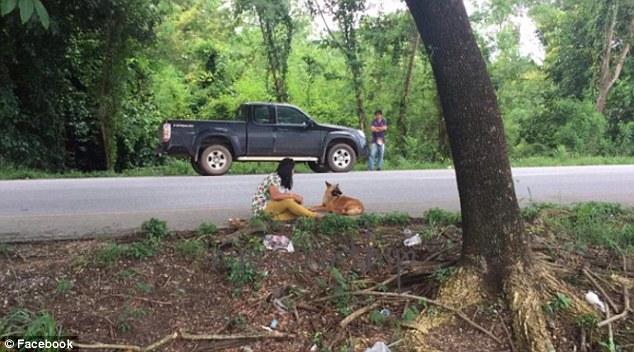 Thái Lan: Sau 1 năm nằm đợi chủ bên vệ đường, chú chó khốn khổ bị xe ô tô cán chết - Ảnh 2.