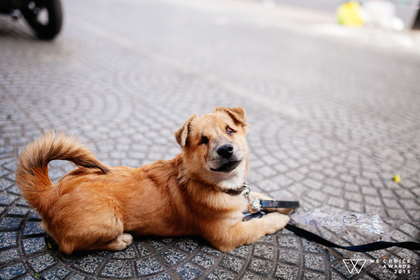 Cuộc sống hiện tại của anh đánh giày câm và chú chó mù: Hạnh phúc vẫn còn được viết tiếp - Ảnh 10.