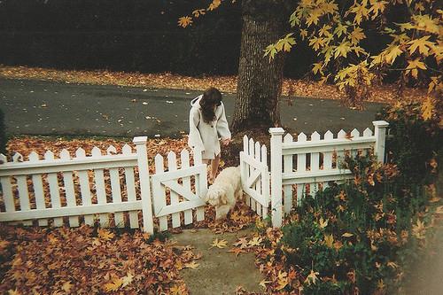 Kết quả hình ảnh cho couple autumn favim