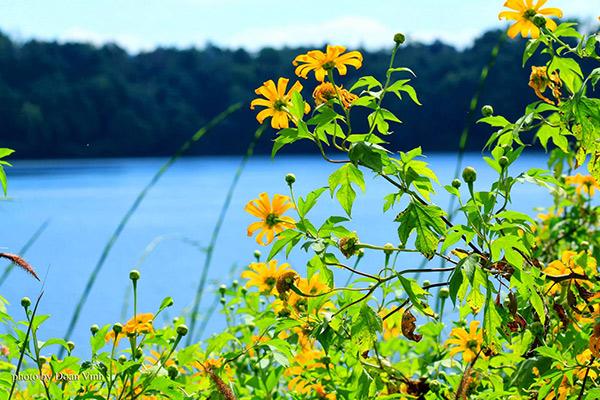 4 điểm đến đẹp ngất ngây nên ghé để ngắm hoa dã quỳ