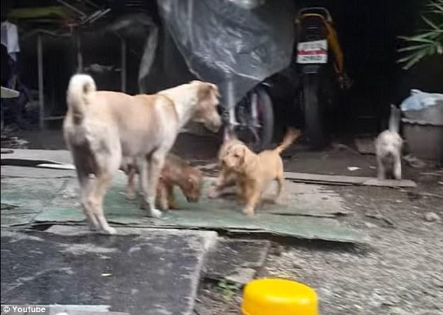 Người phụ nữ cho chú chó hoang chiếc đùi gà và không thể ngờ cái kết của câu chuyện - Ảnh 3.